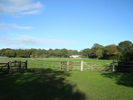 Peaceful paddocks